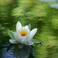 The Meditating 花