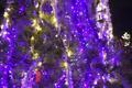 The Oneida tree lighting 2018 (Oneida Indian Reservation ~Oneida, Wisconsin) 🎄  - christmas photo