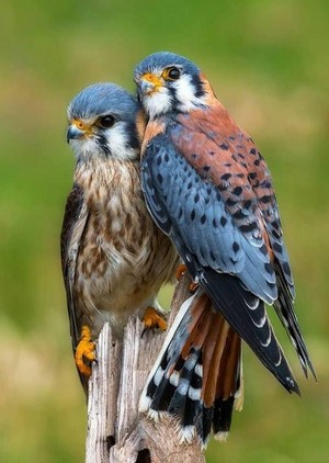 beautiful birds💖