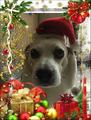 holiday spirit - dogs fan art