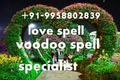 powerful((////~91 9958802839 Love Marriage Specialist Baba ji Mumbai - all-problem-solution-astrologer photo