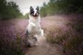 sweet dog💖 - dogs photo
