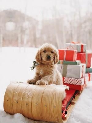 sweet dog 小狗 in winter❄