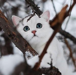 sweet kitten in winter❄