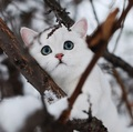 sweet kitten in winter❄