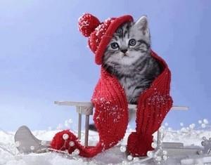 sweet winter kitten❄