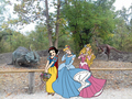 Snow White,Cinderella and Aurora - disney-princess fan art