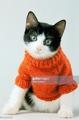 Kitty Sweater Model
