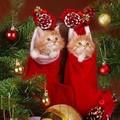 Merry christmas❄️🎄💖 - christmas photo