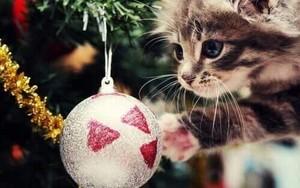 Merry pasko my so sweet kulay-lila hunnie❄️🎄💖
