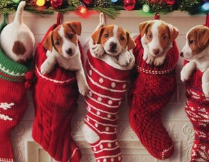 Merry christmas my winterbeauty heather❄️🎄💖