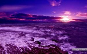 violet Paradise