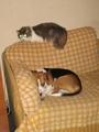 Yuri the cat and Fugu - fanpop-pets photo