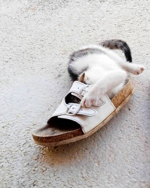 gatos logic 07