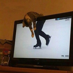 Kucing logic 10