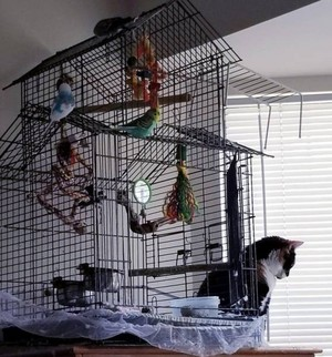 Kucing logic 12