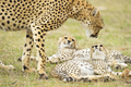 masai mara - reueltravel photo