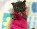 Kitty Sweater Modeo