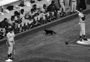 Black Cat At A Baseball Game