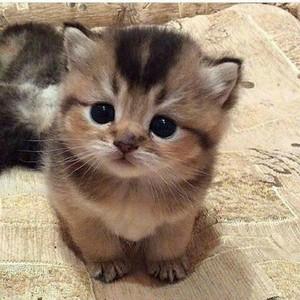 Cute Kitten 😺