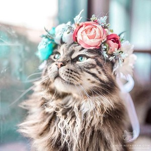 flor Crown Cat