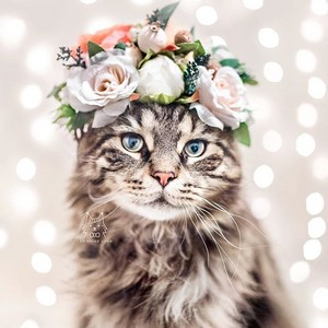 fiore Crown Cat