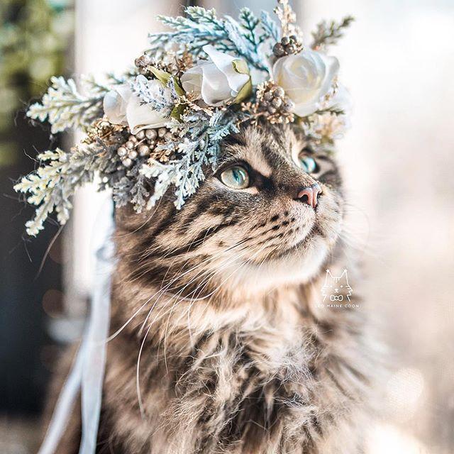 Flower Crown Cat
