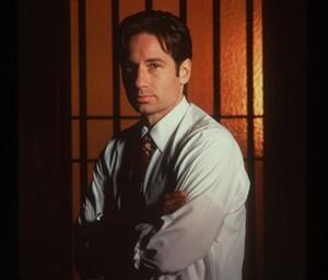rubah, fox Mulder