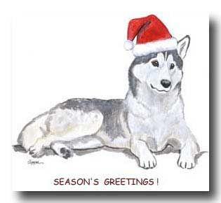 Husky Christmas Cards.Husky Christmas Card 80smusiclover1 Photo 41809522 Fanpop
