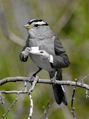 Sophisticated bird