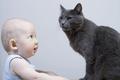 Babysitting - cats photo