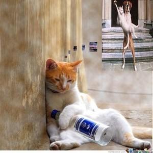 बिल्ली MEOW