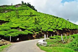 Munnar, India