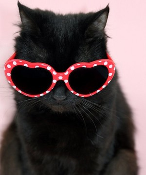One.Cool Kitty