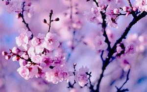 Spring feelings💖💖💖