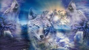 Аниме волк Обои 20