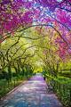 beautiful spring🌹🌸💐 - gdragon612 fan art