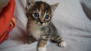 प्यारी बिल्ली के बच्चे