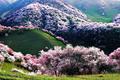 spring feelings🌹🌸💐 - random photo