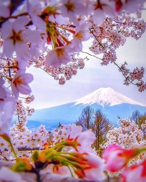 spring feelings🌹🌸💐