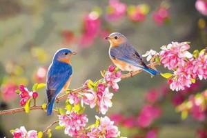 spring feelings🌺🌹💐