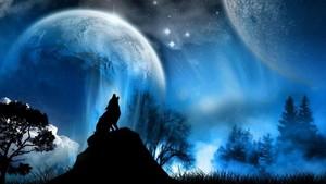 волк Обои 10