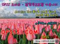 청주오피 ❮❰ opss5252 . C 0 m ❱❯ 오피쓰д청주스파 - sensativemo photo