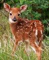 Beautiful Deer 💖