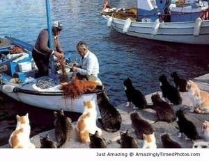 Feeding Time On Cat Island
