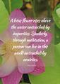 Spiritual quote _ Wai Lana
