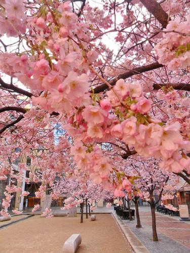 Lavendergolden Hintergrund entitled beautiful spring for my cutie Violet🌺🌹💐💖
