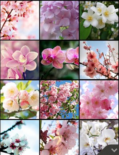 Lavendergolden Hintergrund titled beautiful spring for my cutie Violet🌺🌹💐💖