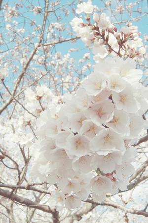 beautiful spring for my cutie cynti🌺🌹💐