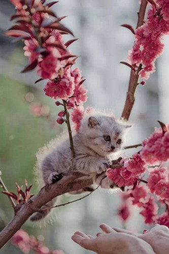 HaleyDewit वॉलपेपर called beautiful spring for my sweetie Ellen🌺🌹💐💖